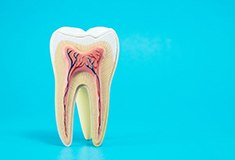 anatomy of a tooth on sky blue background
